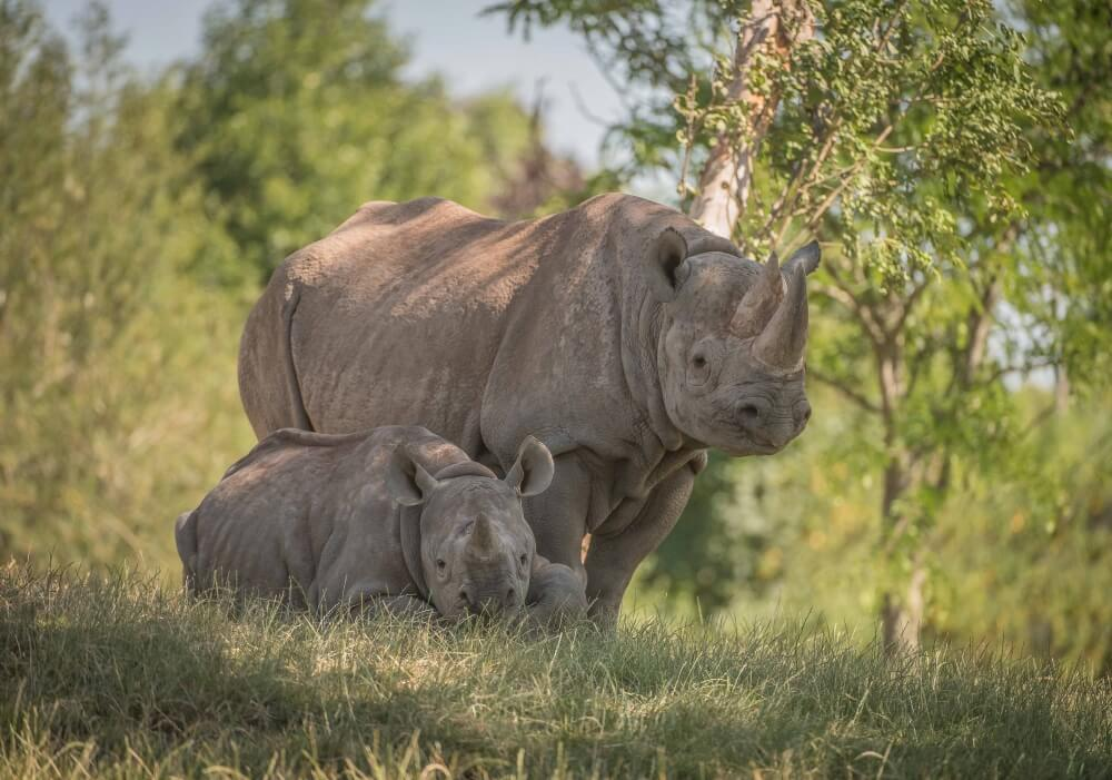 Chester Zoo: Preventing Extinction with Science