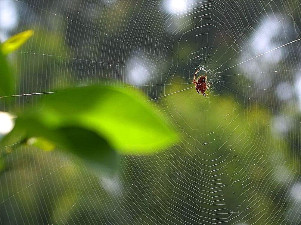 Spider Silk for the Future